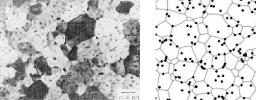 Left: In-situ TEM image of a grain structure pinnend by CuAl2 precipitates in an Al alloy film (Longworth and Thompson 1991). Right:  Image from a 3D simulation of grain growth in a thin film, assuming the same number, size and initial distribution of the precipitates and the  same film thickness as for the Al alloy film on the left. The section is taken through the middle of the film.